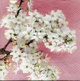 hübscher Kirschblütenast - pretty cherry blossom branch - jolie branche de fleur de cerisier