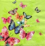 viele bunte Schmetterlinge - many colorful butterflies - de nombreux papillons colorés