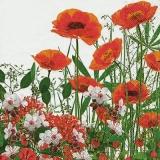 Klatschmohnwiese, Mohnblumen - Poppy meadow, poppies - Coquelicots, coquelicots