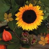 Sonnenblume, Kastanien & Pysalis - Sunflower, chestnuts & physalis - Tournesol, châtaignes et physalis