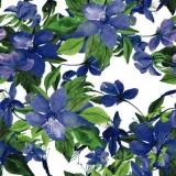 blaue Clematis - blue clematis - clématite bleue