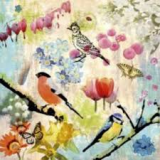 3 Vögel, 2 Schmetterlinge & 1 Marienkäfer besuchen schöne Blumen - 3 birds, 2 butterflies & 1 ladybird visit beautiful flowers - 3 oiseaux, 2 papillons et 1 coccinelle visitent de belles fleurs