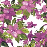 wunderschöne Clematis in pink - beautiful clematis in pink - belle clématite en rose