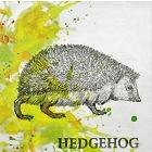 Igel - Hedgehog - hérisson