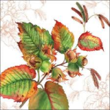 Haselnusszweig, Haselnüsse - Hazelnut branch, hazelnuts - Branche de noisettes, noisettes