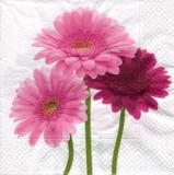 3 Gerbera in rose und rot - 3 gerberas in rose and red - 3 gerberas en rose et rouge