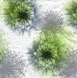 Pusteblume, Löwenzahn - Dandelion - Pissenlit