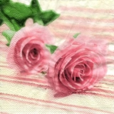 2 zarte Rosen - 2 delicate roses - 2 roses délicates