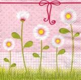 5 Margeriten - 5 daisies - 5 marguerites