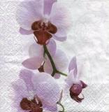 Orchidee im zarten Fliederton - Orchid in a delicate lilac tone - Orchidée dans un ton lilas délicat