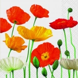 weisser, gelber & roter Mohn - white, yellow & red poppy - coquelicot blanc, jaune et rouge