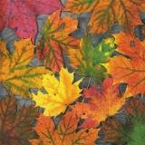 Buntes Laub - Colorful foliage - Feuillage coloré