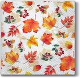 Viele verschiedene Laubblätter - Many different leaves - Beaucoup de feuilles différentes