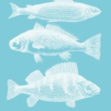 3 Fische - 3 fish - 3 poissons