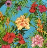 tropische Pflanzen & Blüten - tropical plants & flowers - plantes tropicales et fleurs