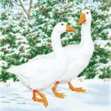 2 Gänse beim Spaziergang im Schnee - 2 geese walking in the snow - 2 oies marchant dans la neige