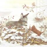 Esel & Katze treffen sich im Garten - Donkey & cat meet in the garden - Âne et chat se rencontrent dans le jardin