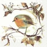 Vogel sitzt auf einen Zweig - Bird sits on a branch - Oiseau est assis sur une branche