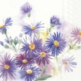 blaue Astern - blue asters - asters bleus