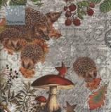 Igelfamilie im Herbst - Hedgehog family in autumn - Famille hérisson en automne