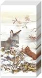 Esel & Katze - Donkey & cat - Âne et chat