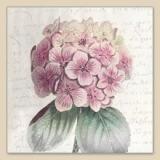 Geschriebenes, 1 wunderschöne Hortensie - Written, 1 beautiful hydrangea - Écrit, 1 belle hortensia