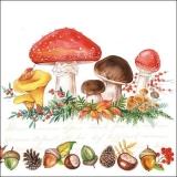 verschiedene Pilze - different mushrooms - champignons différents