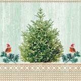 2 kleine Rotkehlchen mit einer Weihnachtsmütze besuchen einen Tannenbaum - 2 little robins with a Santa hat visit a Christmas tree - 2 petits merles avec un chapeau de Santa visiter un arbre de Noël