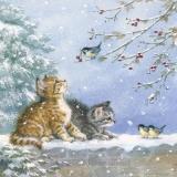 2 kleine Kätzchen spielen mit 3 kleinen Vögeln - 2 little kittens play with 3 little birds - 2 petits chatons jouent avec 3 petits oiseaux