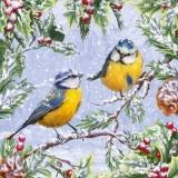 2 Blaumeisen im winterlichen Geäst - 2 blue tits in winter branches - 2 mésanges bleues dans les branches d hiver