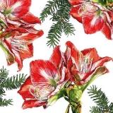gemalte Amaryllis - painted amaryllis - Amaryllis peint