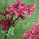 Kirschblüten & Schmetterlinge