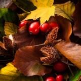 buntes Herbstlaub mit Hagebutten und Bucheckerncolorful autumn leaves with rosehips and beechnuts - feuilles d automne colorées avec églantiers et beechnuts