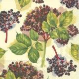 Holunderbeerenzweig - Elderberry branch - Branche de sureau