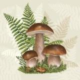 Steinpilze & PfifferlingePorcini mushrooms and chanterelles - Cèpes et chanterelles