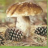 prächtiger Steinpilz & Tannenzapfen - magnificent porcini mushroom & pine cones - magnifique cèpes et pommes de pin