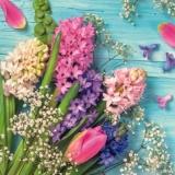 Hyazinthe, Schleierkraut, Tulpen & andere Frühlingsblüher - Hyacinth, gypsophila, tulips & other spring flowers - Jacinthe, gypsophile, tulipes et autres fleurs printanières