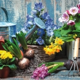 Giesskanne, Grubber, Blumenzwiebeln & schöne Frühlingsblüher vor einer Holzwand - Watering can, cultivator, flower bulbs & beautiful spring blooms in front of a wooden wall - Arrosoir, cultivateur, bu