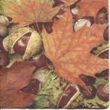 Kastanien & Kastanienblätter - Chestnuts and chestnut leaves - Châtaignes et feuilles de châtaignier