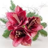 tolle Weihnachtsrose - great Christmas rose - grande rose de Noël