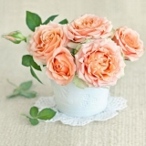 zarte Rosen in einer Topfvase - tender roses in a potted vase - roses tendres dans un vase en pot