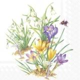 Biene besucht Schneeglöckchen & Krokusse - Bee visits snowdrops & crocuses - Abeille visite perce-neige et crocus