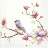 2 Vögel sitzen auf einen Magnolienast - 2 birds are sitting on a magnolia branch - 2 oiseaux sont assis sur une branche de magnolia