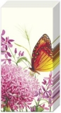 Allium & Schmetterling - Allium & Butterfly - Allium et papillon