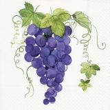 blaue Trauben - blue grapes - raisins bleus