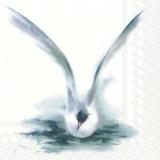 Seeschwalbe - Tern