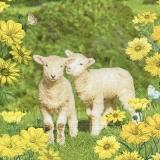 2 Lämmer auf der Wiese - 2 lambs in the meadow - 2 agneaux dans le pré