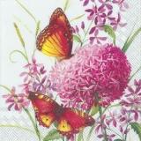 Schmetterlinge besuchen Allium - Butterflies visit Allium - Les papillons visitent Allium
