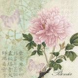 zarte Schmetterlinge, japanische Schriftzeichen & eine wunderschöne Rose - delicate butterflies, Japanese characters & a beautiful rose - papillons délicats, caractères japonais et une belle rose