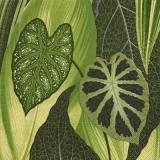 Palmenblätter - Palm leaves - feuilles de palmier